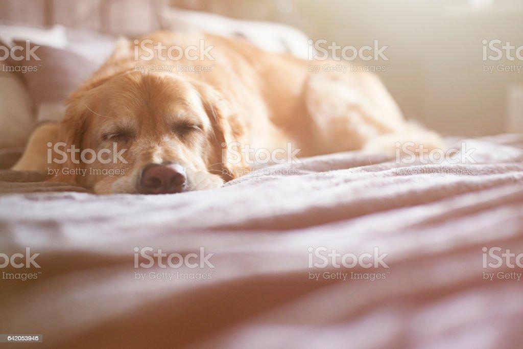 Dormitorio perro  - foto de stock