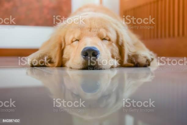 Sleeping dog picture id840387432?b=1&k=6&m=840387432&s=612x612&h=ueqaxl5rawaoxfu4leg1hzwsf8 cqy0jst0hr zcjjc=