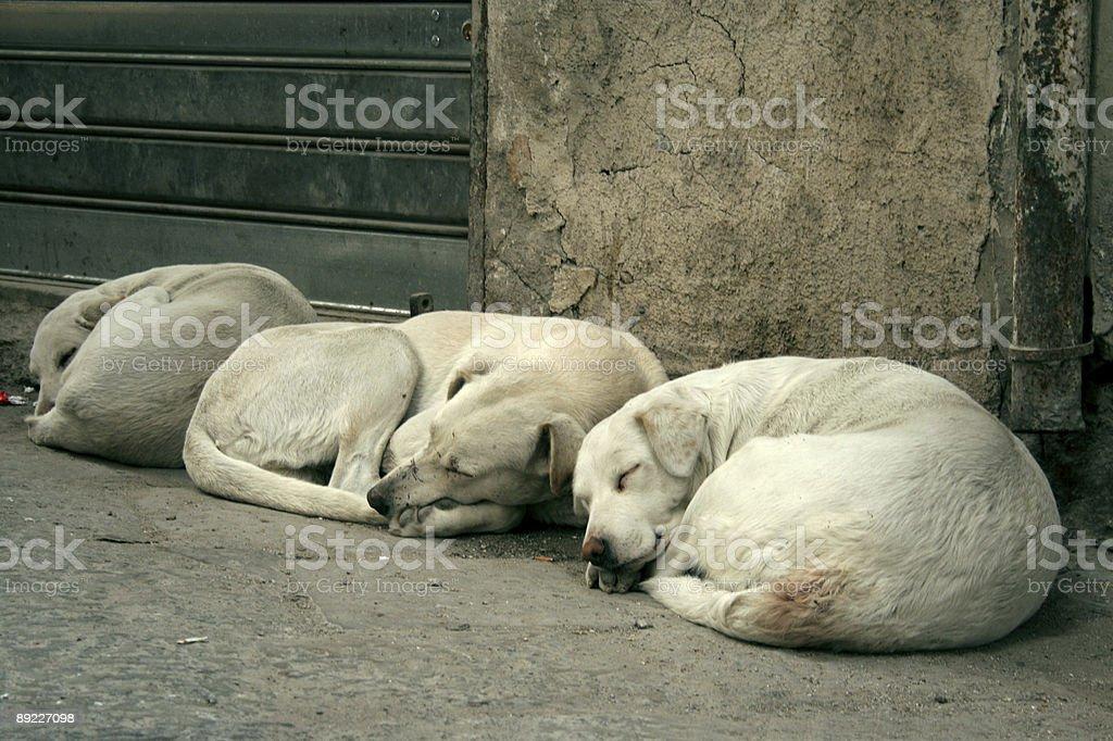sleeping dogs royalty-free stock photo