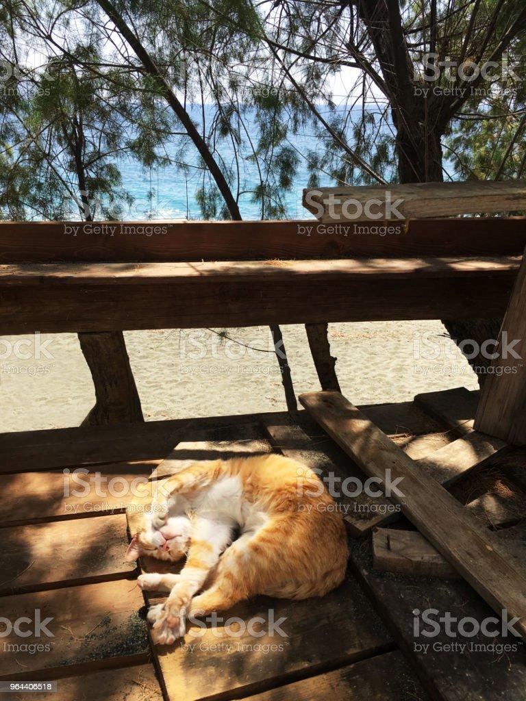 Slapende gember kat - Royalty-free Fotografie Stockfoto