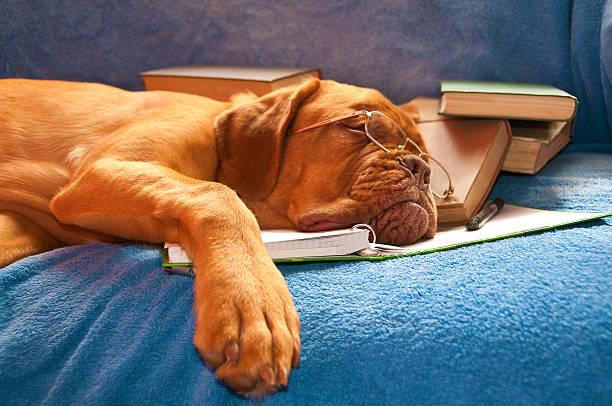 schlafen hund - humor bücher stock-fotos und bilder