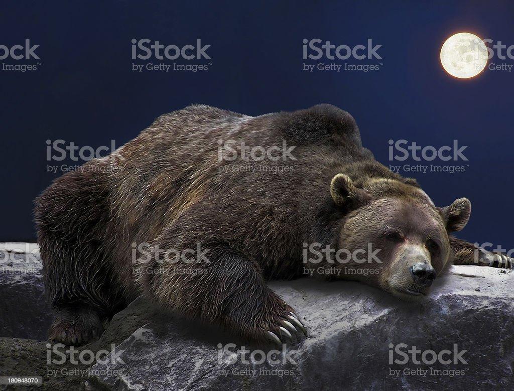 Sleeping grizzly bear stock photo