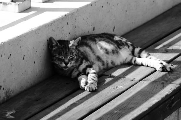 Schlafende glückliche Katze auf einer Bank – Foto