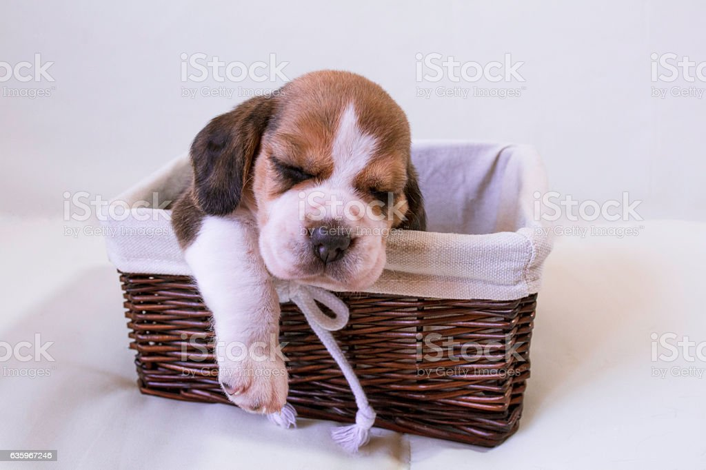 Sleeping in a basket . stock photo