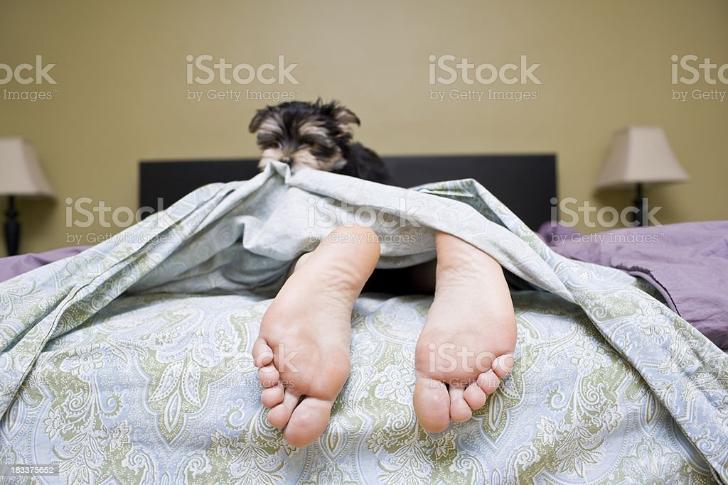 Sleeping in Bed royalty-free stock photo
