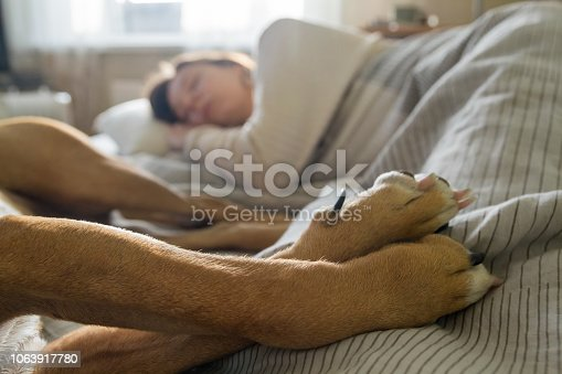 Paws of a dog in bed with human from pet point of view