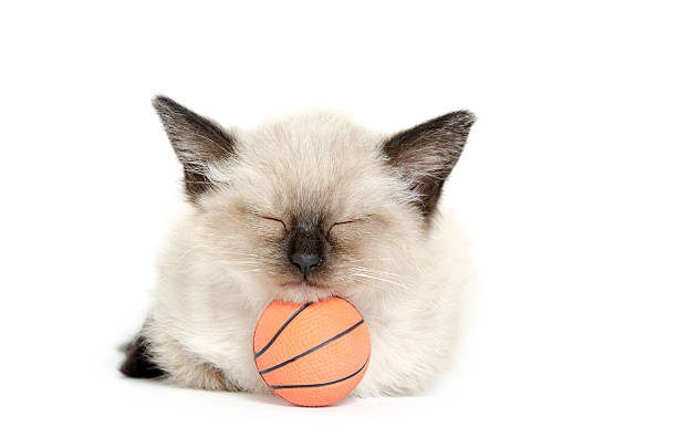 Sleeping kitten and basketball picture id153547860?b=1&k=6&m=153547860&s=612x612&w=0&h=adg  qcyctusfj3zzkn7 sevbvccxpw9rc3orgvocm4=