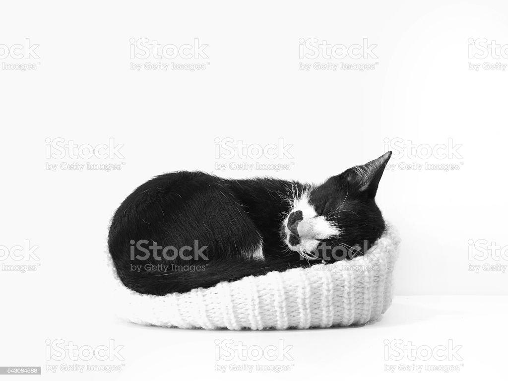 sleeping kitten in black and white stock photo