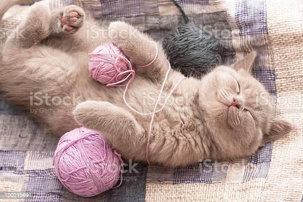 Sleeping kitten picture id120215691?b=1&k=6&m=120215691&s=612x612&h=bqqmjzblqyzjqz3d6trfqksjphmgnxlwm9pfrobacna=
