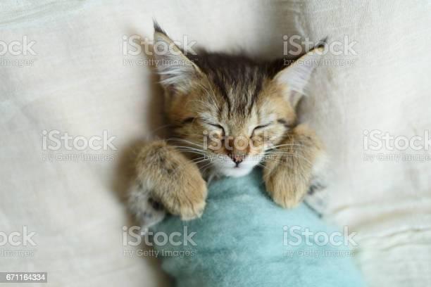 Sleeping kitten picture id671164334?b=1&k=6&m=671164334&s=612x612&h=hfg asiz2khki8jpel77brsai13ocat3 iv3cj0554u=
