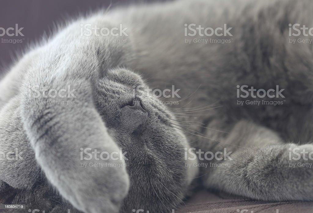 Sleeping Kitty stock photo