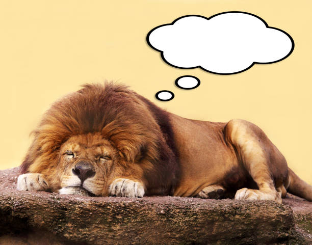 Sleeping lion with thought bubble stock photo