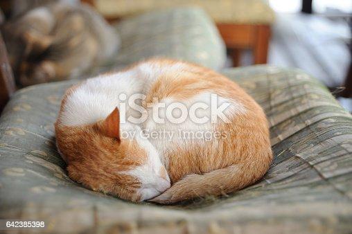 Sleeping little cat on a chair