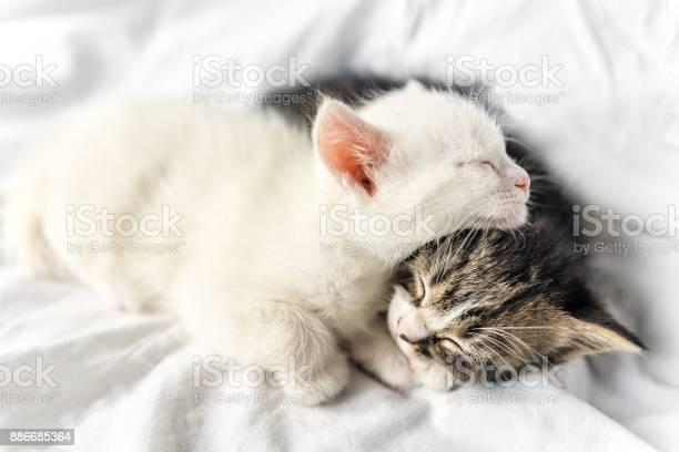 Sleeping little cats picture id886685364?b=1&k=6&m=886685364&s=612x612&h=bl9qz4qbwheqiznth7gsq7xgznpwj7yq2tdtscb3raq=