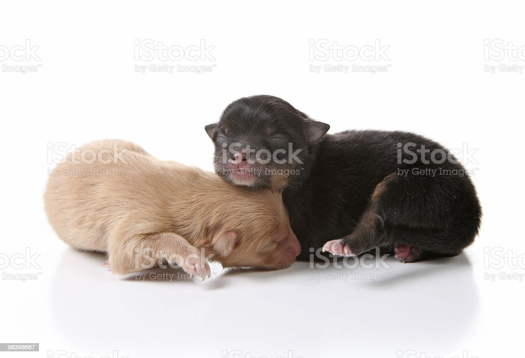 Sleeping Newborn Puppy Dogs on White - Royalty-free Animal Stock Photo