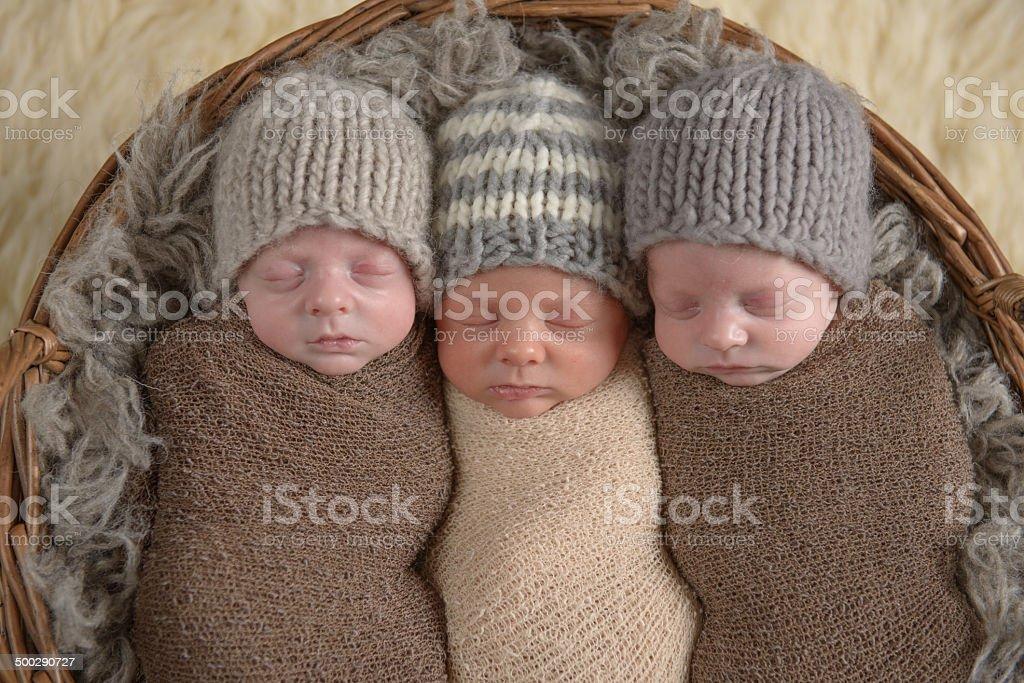 Sleeping Newborn Triplets stock photo