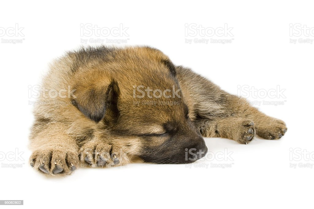 Sleeping puppy isolated over white background royalty-free stock photo