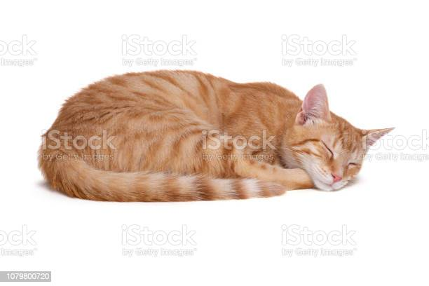 Sleeping red cat on white background picture id1079800720?b=1&k=6&m=1079800720&s=612x612&h=cgitacbn0fvn984kx ezwbmdexbbysg3u 8cnfjlvs0=