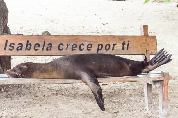 sleeping sea lion - dally stock pictures, royalty-free photos & images