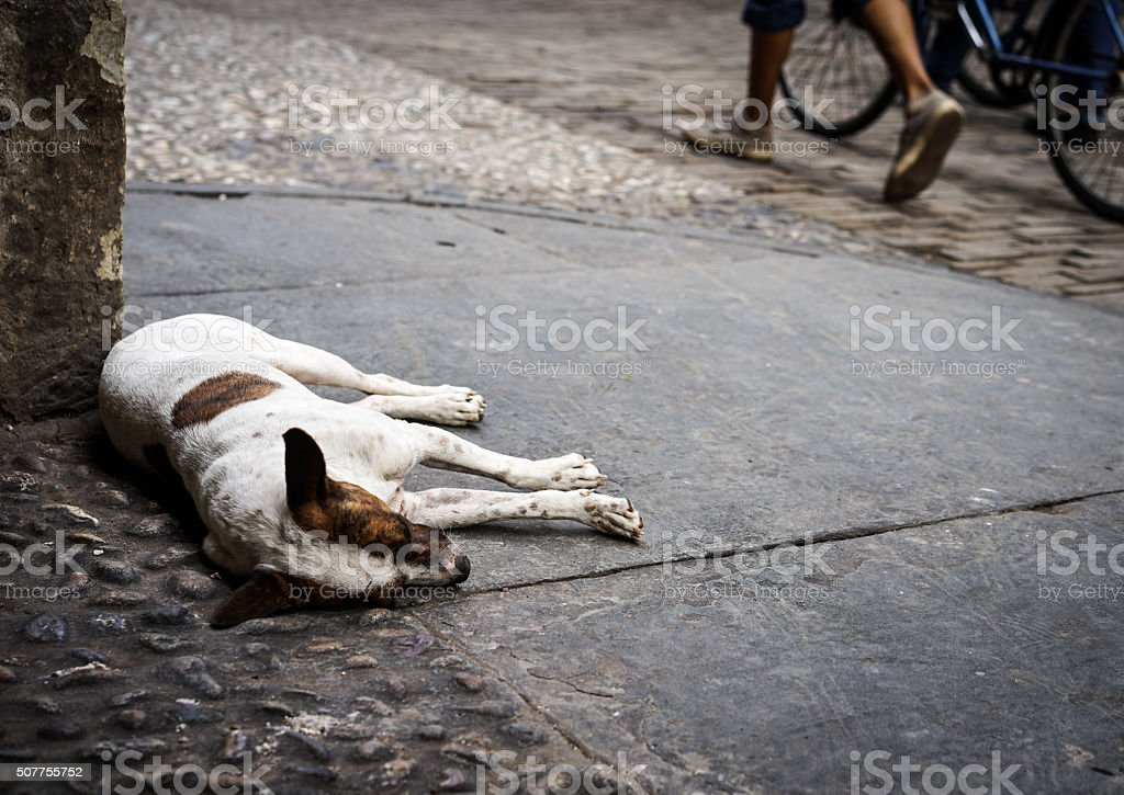 Sleeping Street Dog stock photo