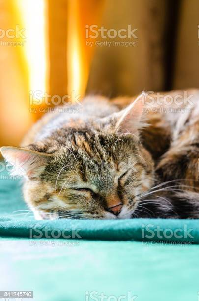 Sleeping tabby cat portrait picture id841245740?b=1&k=6&m=841245740&s=612x612&h=zyew5hkulo1ltaaf02xtpcqw 2rb4 p0noy6g0v5 bg=