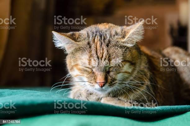 Sleeping tabby cat pportrait picture id841245764?b=1&k=6&m=841245764&s=612x612&h=liajfc16t3cqyjmk4udfdzgpasd1dmvdbx0uesnmoy8=