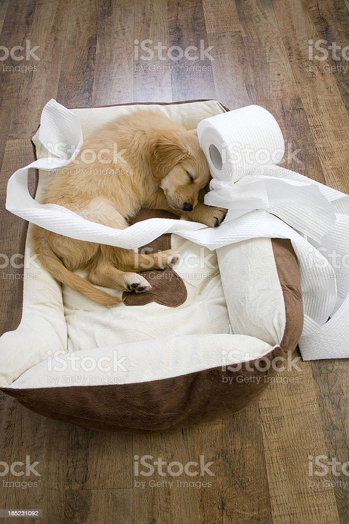 Sleeping Toilet Roll Pup stock photo