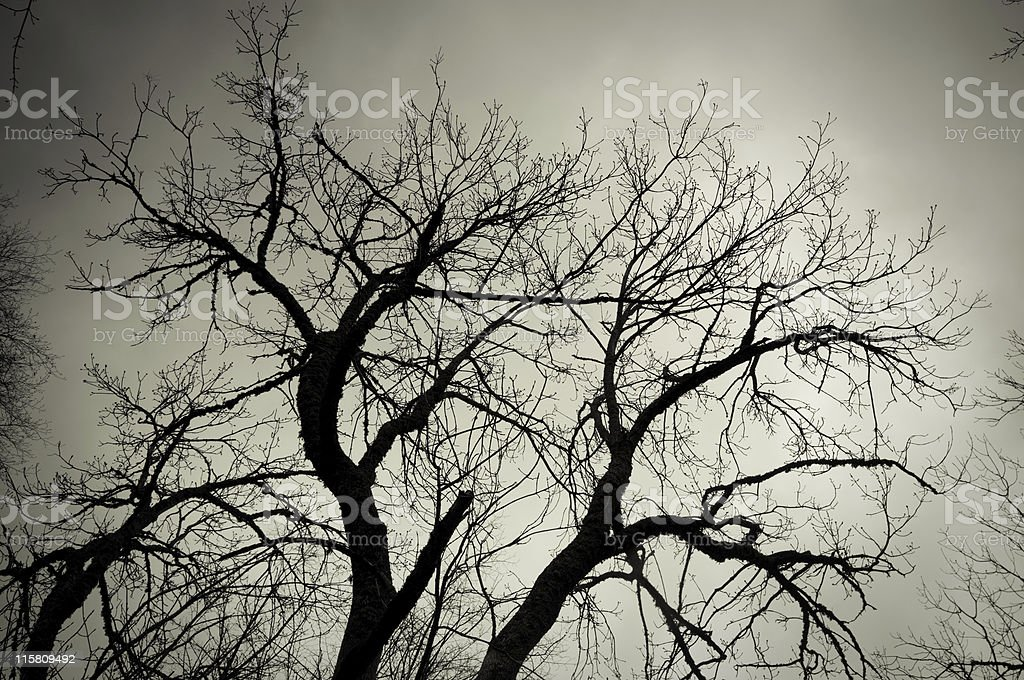 Sleeping tree royalty-free stock photo