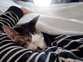 猫と寝て、POV