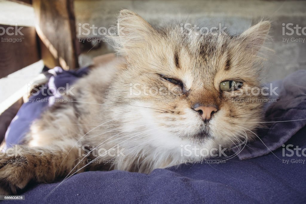 Sleepy cat, Furry Tabby kitten lying royalty-free stock photo