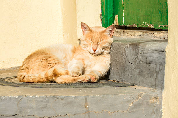 Sleepy cat in greece picture id544737302?b=1&k=6&m=544737302&s=612x612&w=0&h=481fqqygtbo7dixbl  x0ia3y xbmvl4uanlboctvg4=