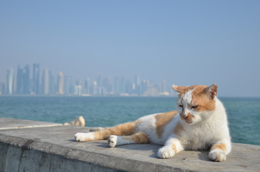 A sleepy cat laying by the sea, Doha