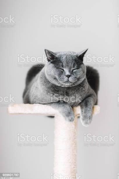 Sleepy cat laying on the scratcher picture id939601792?b=1&k=6&m=939601792&s=612x612&h=xhhfhwdtejxyoe48dyaoqh3gqdvwdrwjfqvgbsot oy=