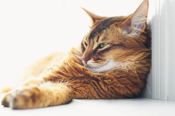 Sleepy cat lying on bright window sill indoor picture id1201778873?b=1&k=6&m=1201778873&s=612x612&w=0&h=mgzswpxgednqktungm959a nc4e6ykb2tens y48wk8=