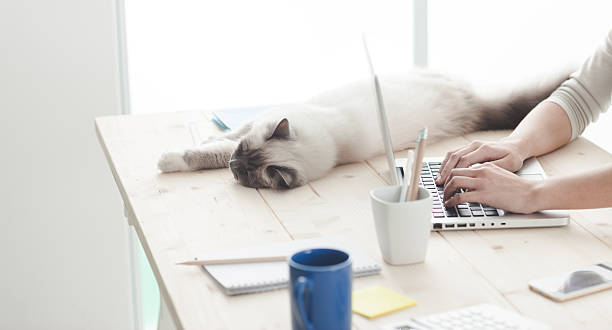 Sleepy cat on a desktop picture id611772406?b=1&k=6&m=611772406&s=612x612&w=0&h=ihimi2pqezxmy3vwugw1s1tvt5o63kiyv tj32xo0x0=