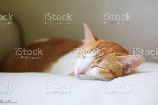 Sleepy cat on couch picture id972144700?b=1&k=6&m=972144700&s=612x612&h=3fgef7tqzu8qasjnsc2 5gfw kwbdisen7ljo8tyssa=