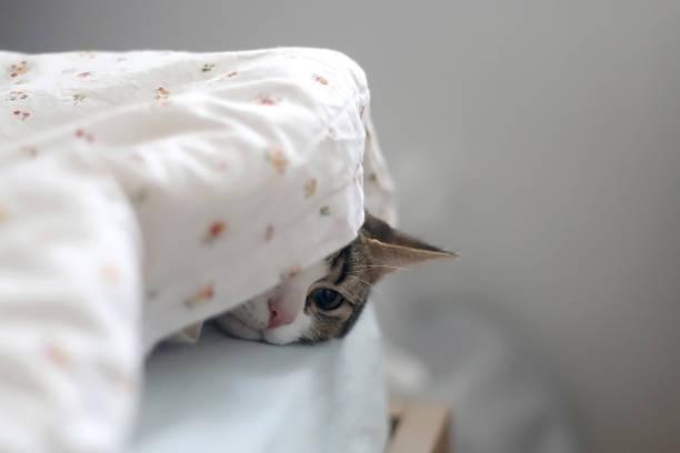 Sleepy cat picture id1148917320?b=1&k=6&m=1148917320&s=612x612&w=0&h=2bwnyynq txfbhgrbdinz3n 8hnu4ktvzjn1fd 0dtg=