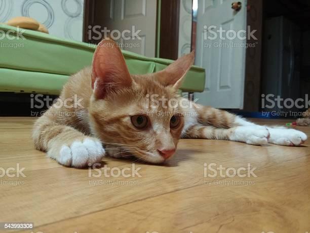 Sleepy cat picture id543993308?b=1&k=6&m=543993308&s=612x612&h=3apabotjzpksgfahj66r2b8yosw nkmapxjp9exmbv4=