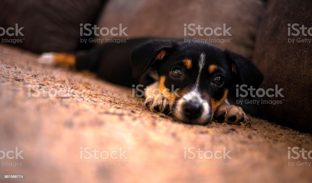 Sleepy Dog. stock photo