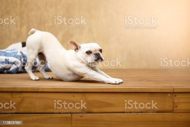Sleepy french bulldog stretching picture id1128237551?b=1&k=6&m=1128237551&s=612x612&h=qw8yxx2moezltw9ubehzpj5wtkhsfjm wpk5atpej0y=