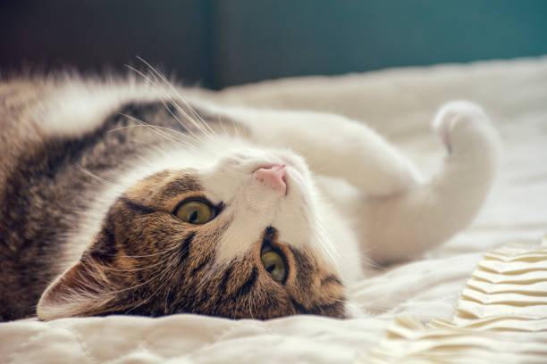 Sleepy gray kitten picture id908228222?b=1&k=6&m=908228222&s=612x612&w=0&h=wcelvviprktjmdzrveawzuhp8t84vab eb5fhsiqo3o=