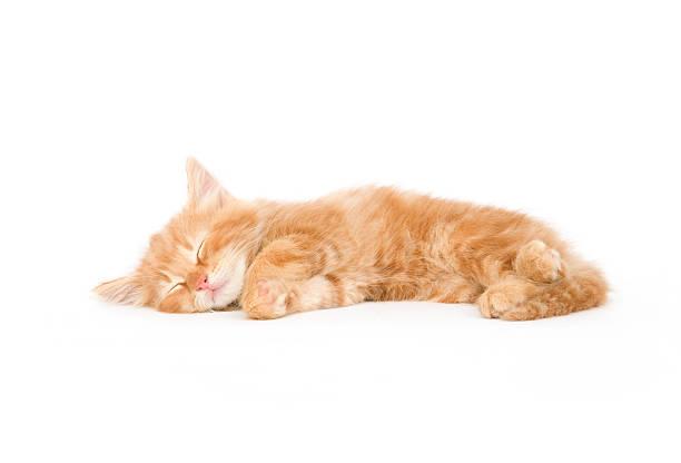 Sleepy kitten one in a series picture id147016912?b=1&k=6&m=147016912&s=612x612&w=0&h=h3yfakar8wg1ewxhywsz3zdmawsyaltsnuwdpu9htsu=