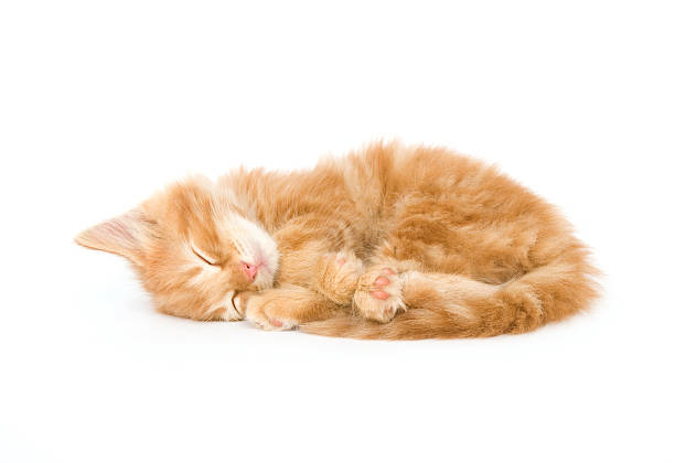 Sleepy kitten one in a series picture id147017121?b=1&k=6&m=147017121&s=612x612&w=0&h=bxghmk koxsqgkqufgmjceja wazppbef5tpm h7zvk=