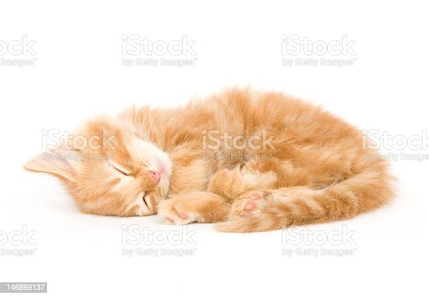 Sleepy kitten picture id146869137?b=1&k=6&m=146869137&s=612x612&h=o3n5p 6yijhqe7qp5zia8wexlo ruiyemwrwqo v0ke=