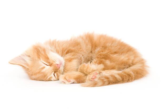 Sleepy kitten picture id146869137?b=1&k=6&m=146869137&s=612x612&w=0&h=nvaiglkbyahrjdkmbwci4uh0 k9e 1ft7 cs8ih6kpa=