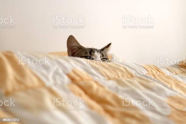 Sleepy kitten picture id960017012?b=1&k=6&m=960017012&s=612x612&h=a8ufh22v88132ur7c4ps in qnwqsctauzfbzmfqcnq=