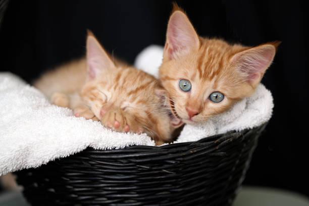 Sleepy kittens picture id1262297014?b=1&k=6&m=1262297014&s=612x612&w=0&h=4ito2 fcd0uwvfddiedkoj0ex1ivzwsghwt1u1tydok=
