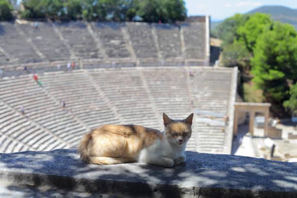 Sleepy kitty cat on the top of Ancient Theatre of Epidaurus, Peloponnese, Greece – zdjęcie