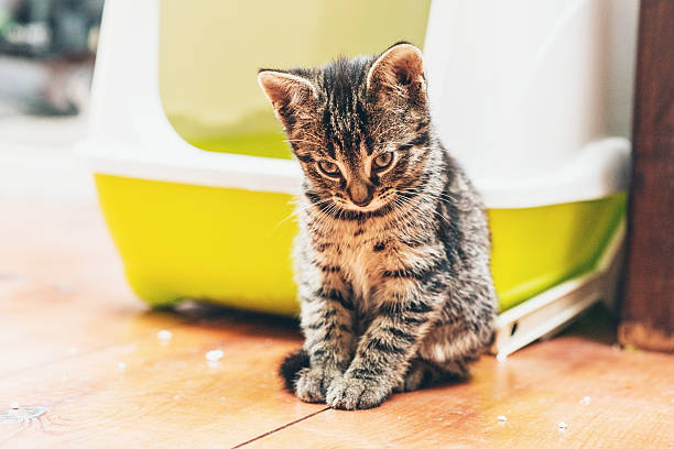 Sleepy pensive little tabby kitten stock photo