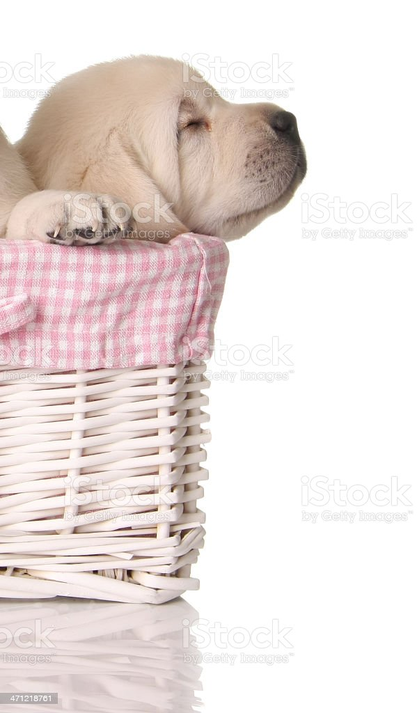 Sleepy puppy stock photo